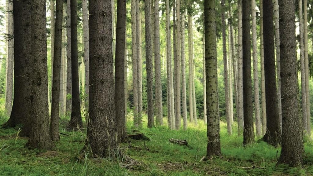 Duferco Biomasse - bosco Vaia